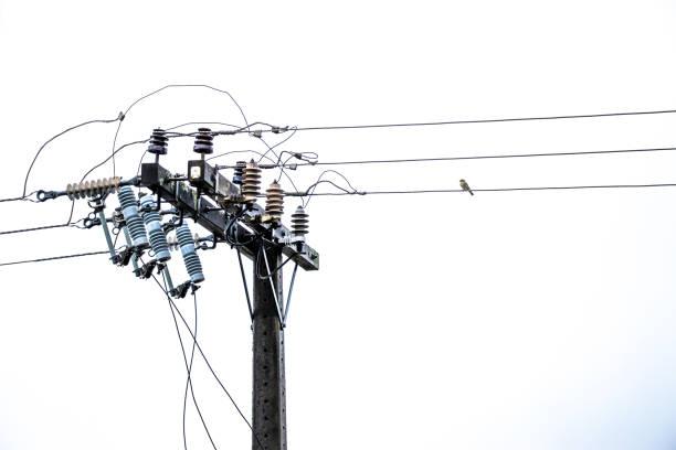 energia post linie z ptakiem - przewód składnik elektryczny zdjęcia i obrazy z banku zdjęć