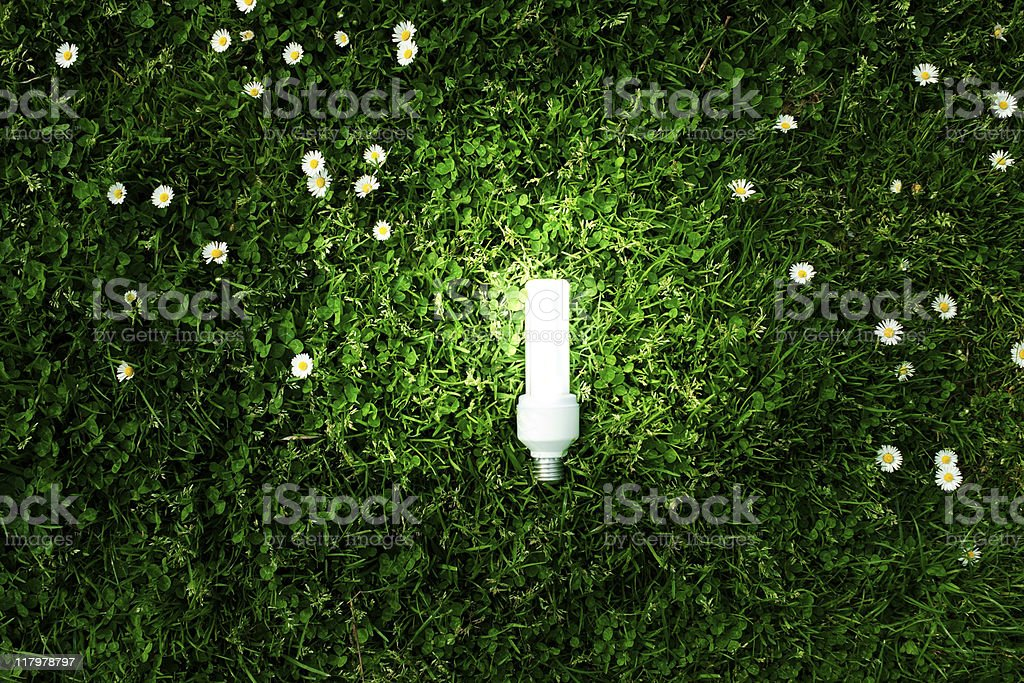 Energy Saving lightbulb on Green Meadow. royalty-free stock photo