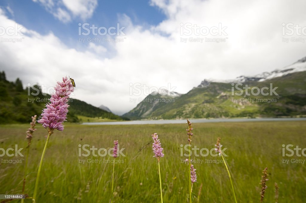 Engadine lakes plate royalty-free stock photo