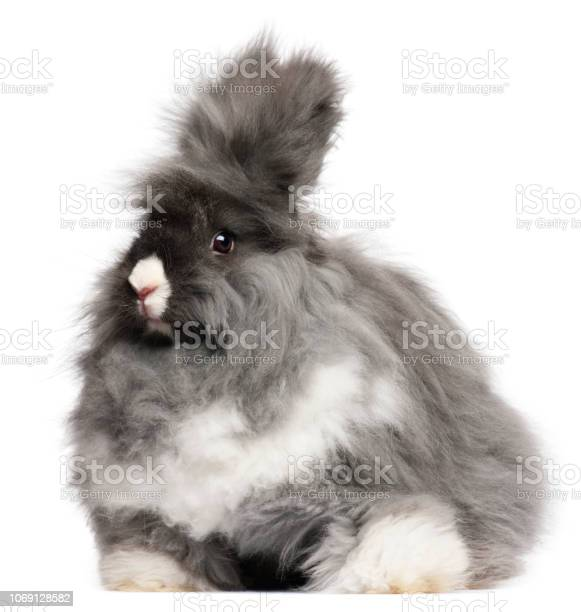 英語 ウサギ