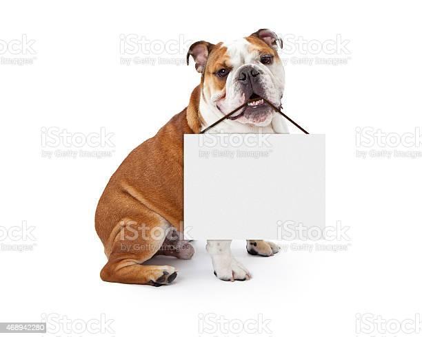 English bulldog holding blank sign picture id468942280?b=1&k=6&m=468942280&s=612x612&h=9woexyluc2wcwyitfpfssgdgrb77rn7j0bhojxc8kc4=