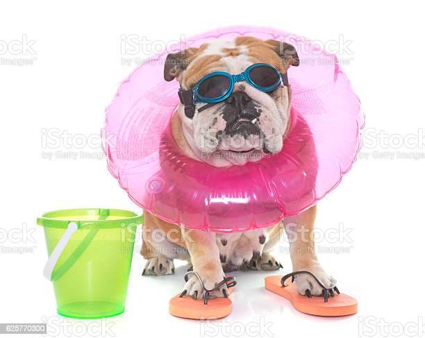 English bulldog in holidays picture id625770300?b=1&k=6&m=625770300&s=612x612&h=7ufmb pymay w4oqtpjqiz77uqfusg2dafa6ooi7aw0=