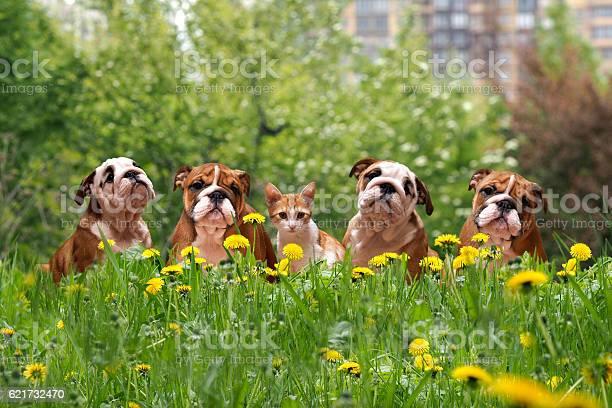 English bulldog puppies in a city park picture id621732470?b=1&k=6&m=621732470&s=612x612&h=ofdfobtiotwly1vukqyhz5gzsmoqaxexp gklyiqznc=