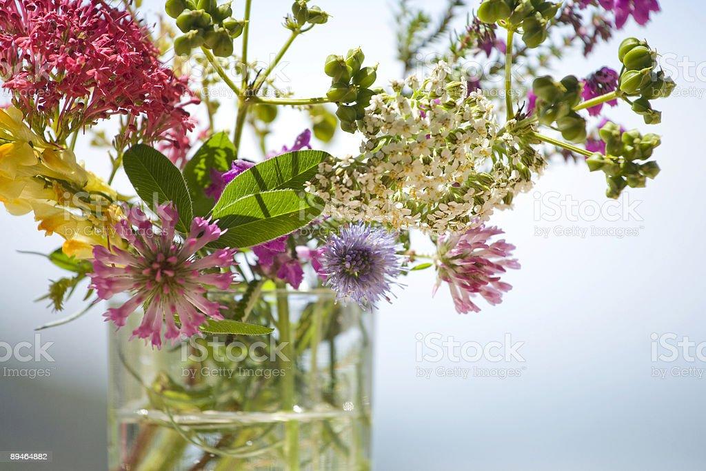 English Coastal Flowers royalty-free stock photo