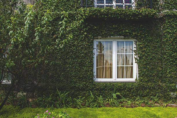 english cottage in greenery - ivy building imagens e fotografias de stock