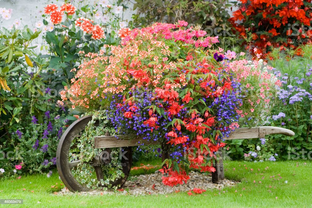 english country garden flower wheelbarrow stock photo