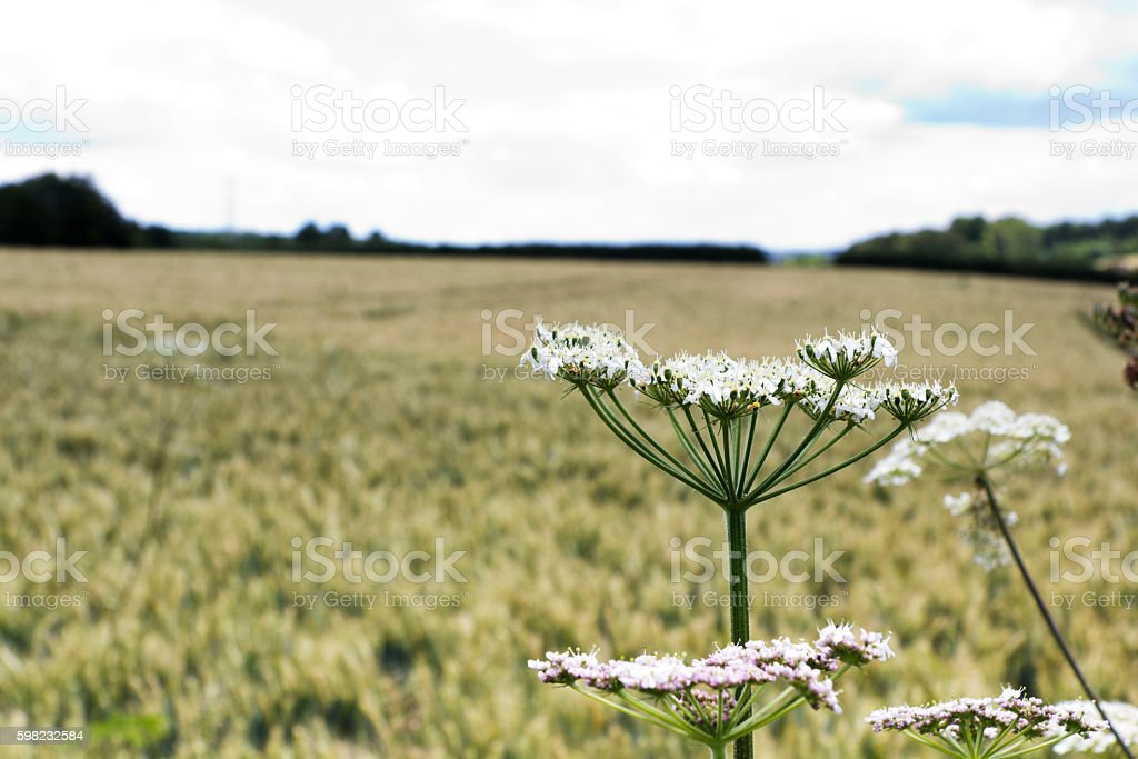 English countryside around the Chilterns in England foto royalty-free