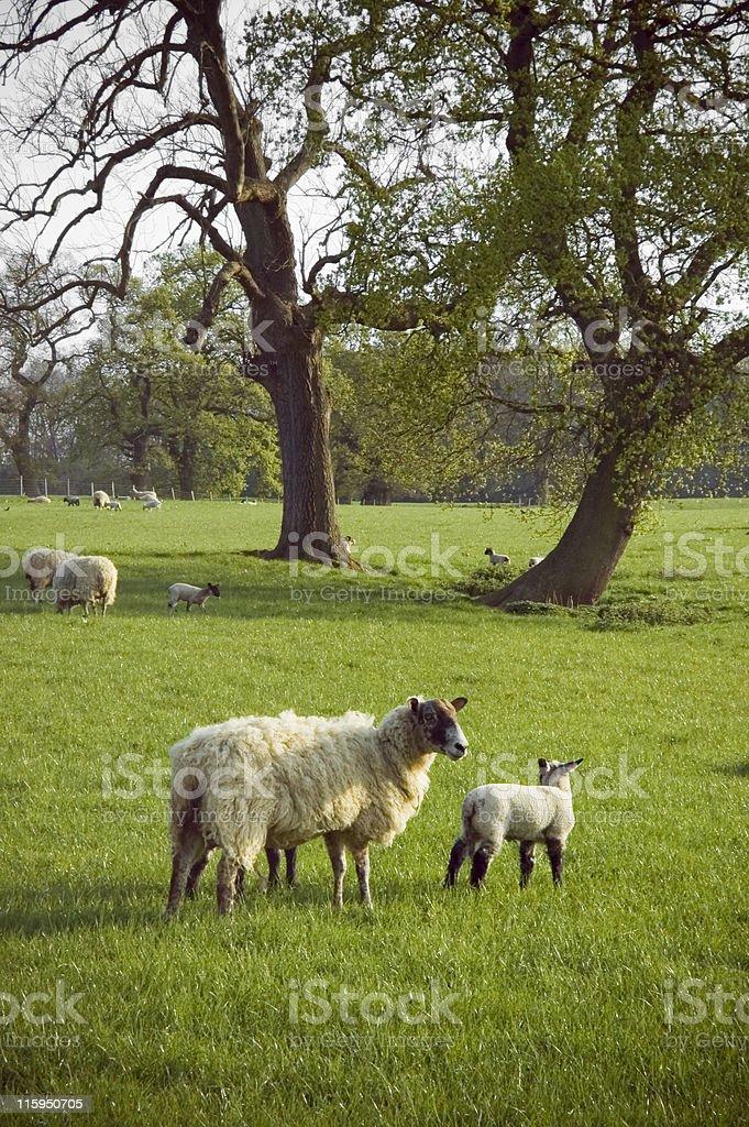 English countryside. royalty-free stock photo