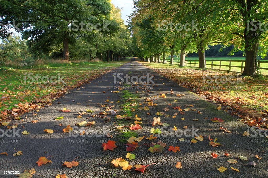 English Countryside Tree Lined Avenue stock photo