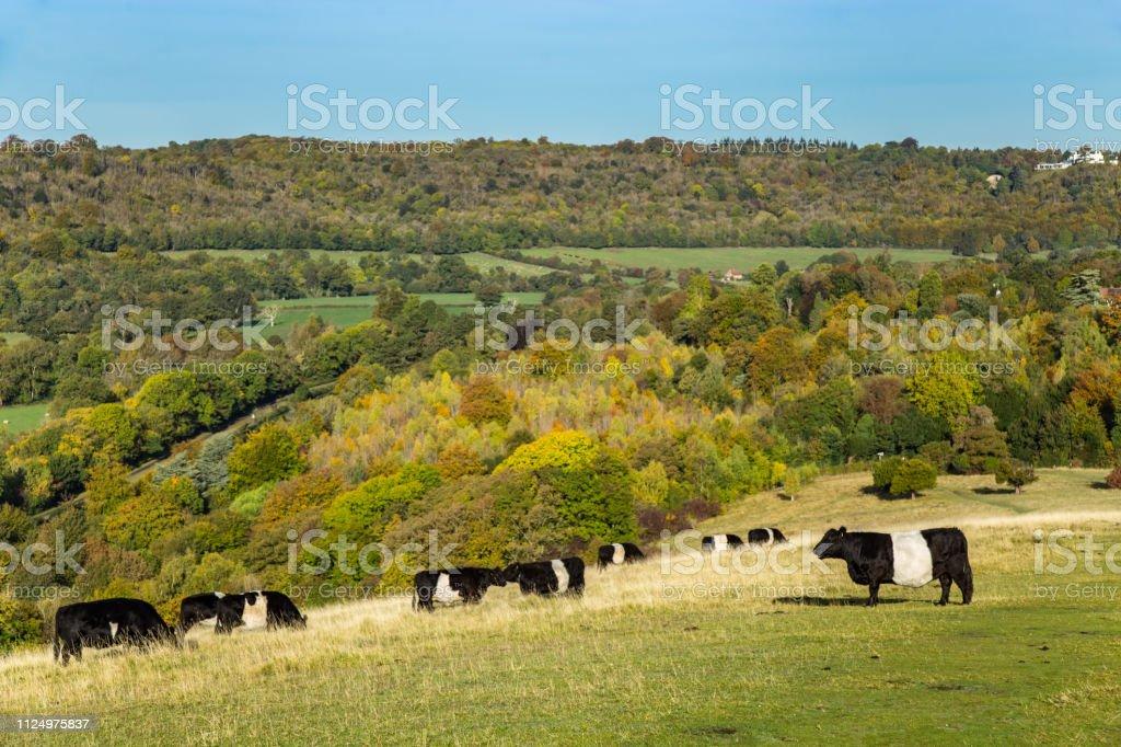 English farm Box Hill England stock photo