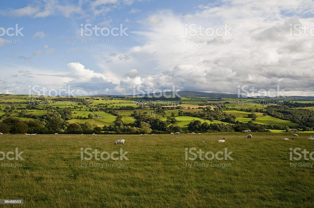 English field royalty-free stock photo