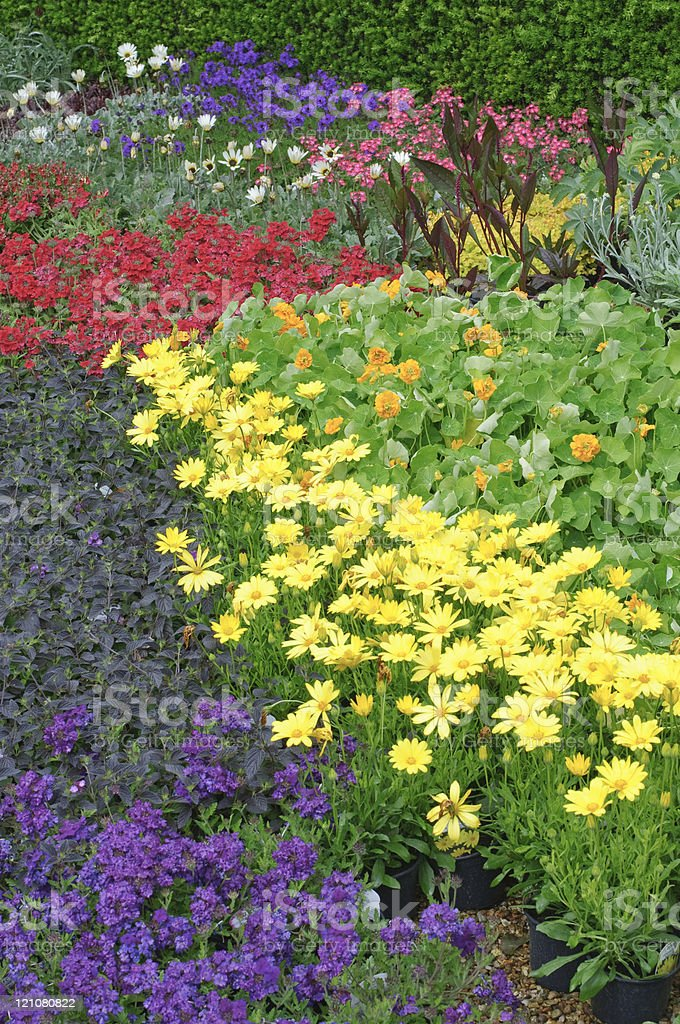 English garden flower bed plants royalty-free stock photo