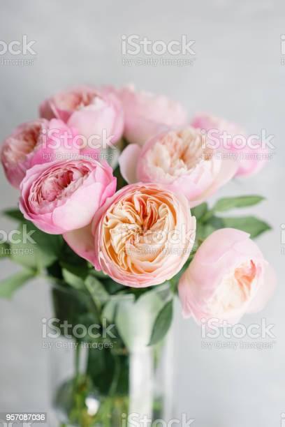 English garden peonies roses david austin multi color pink flower bud picture id957087036?b=1&k=6&m=957087036&s=612x612&h=kmegiptgswofqlldem h4uimzqgrks1ajmrk5pjzvv4=