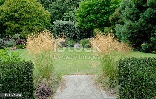 An English garden in high summer with yew hedging and Stipa Gigantea or Golden Oat.