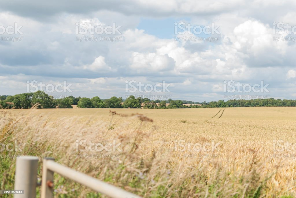 English hay field stock photo