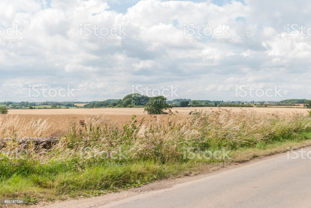 English hay field with road and tree stock photo