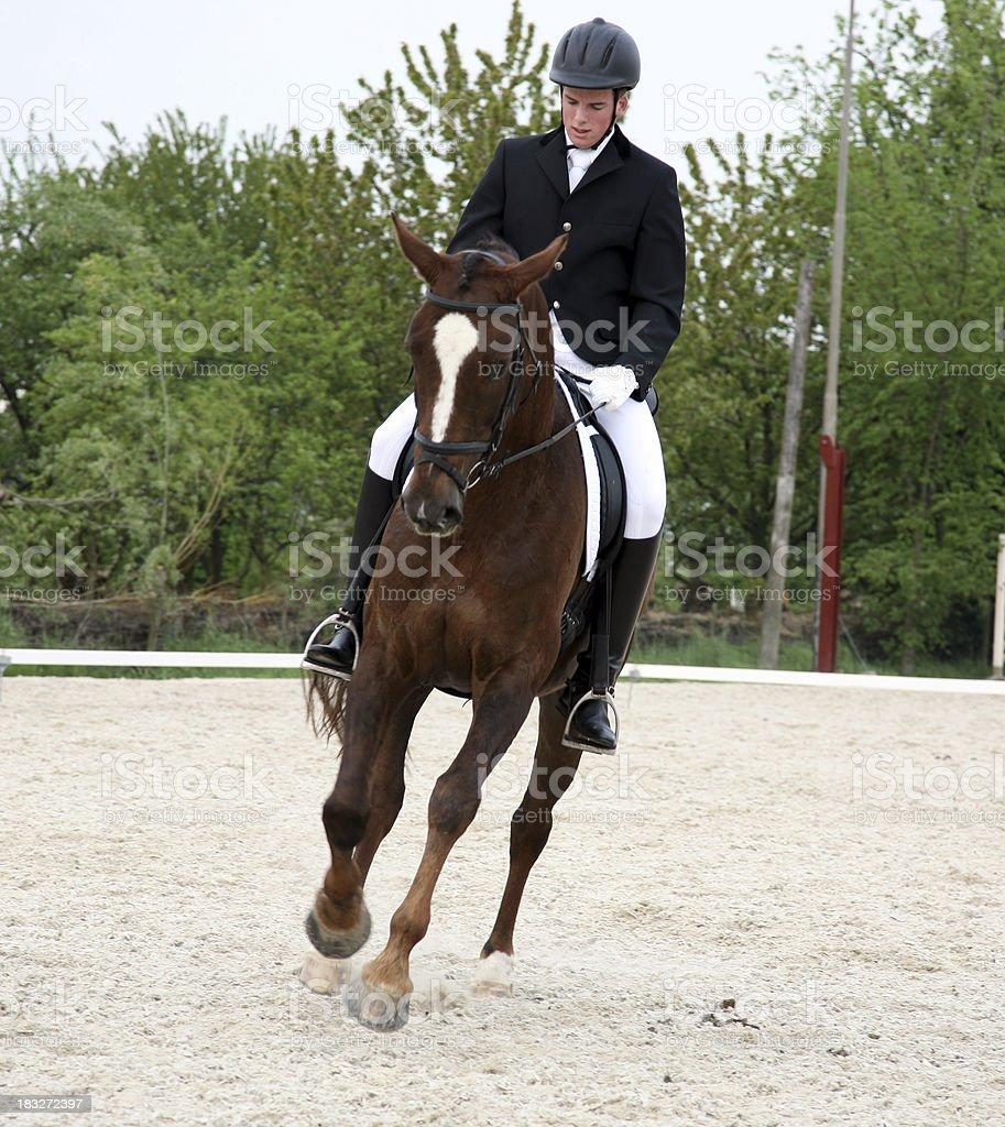 English horse riding stock photo