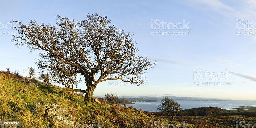 English Lake District: Hawthorn panorama stock photo