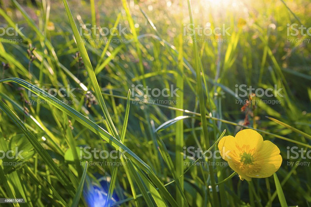 English Lake District: summer meadow at sunset royalty-free stock photo