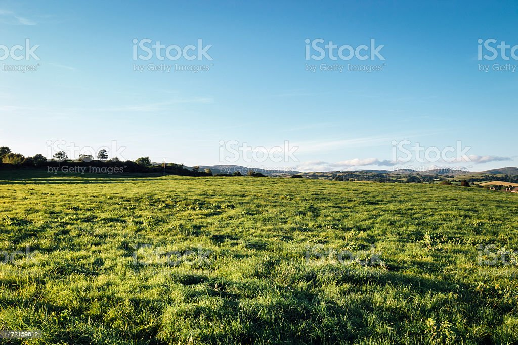 English landscape: green field in late afternoon light stock photo