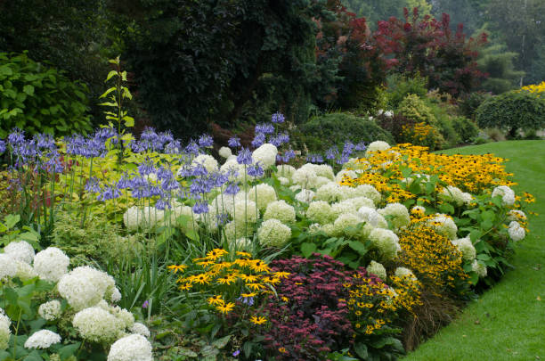 english perennial border - formal garden stock photos and pictures