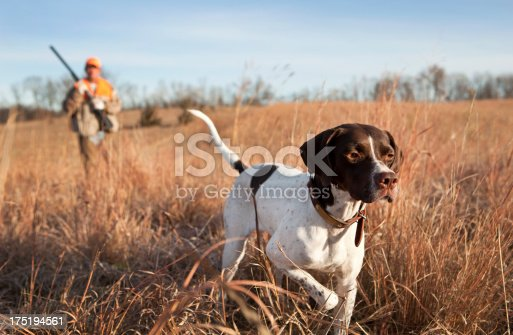 English pointer and man upland bird hunting in the Midwest.