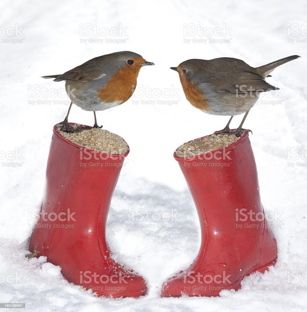 English Robins - European Robin (Erithacus rubecula) - Royalty-free Animals In The Wild Stock Photo