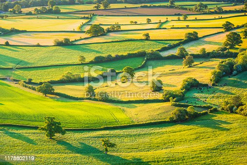 A patchwork of small fields, enclosed by hedges and trees. Photograph of Somerset farmland taken from the air.