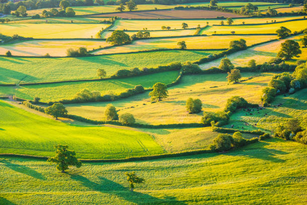 English rolling agricultural landscape A patchwork of small fields, enclosed by hedges and trees. Photograph of Somerset farmland taken from the air. somerset england stock pictures, royalty-free photos & images
