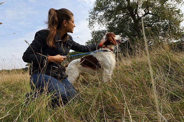 liver belton english setter on lead with russian outdoor girl - whiteway english outdoor girl stock photos and pictures