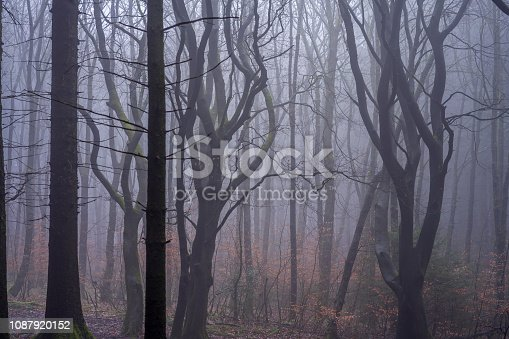 Damp Misty and Foggy Woodland on the West Pennines in Northern England.