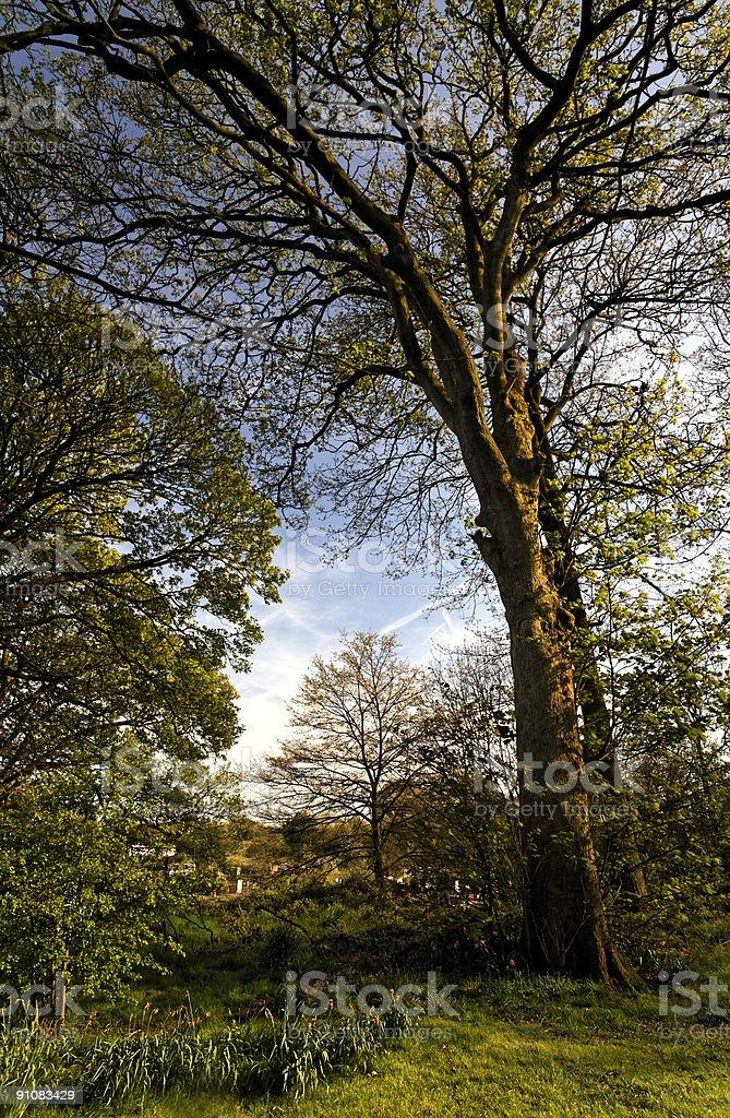 English Suburban Garden with Trees royalty-free stock photo