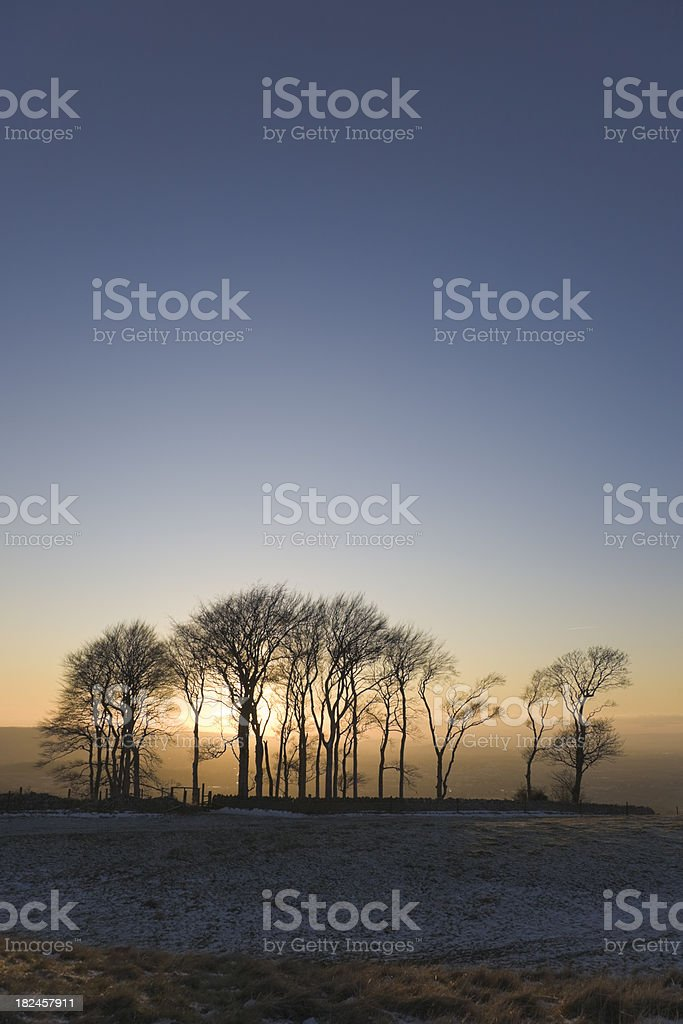 Inglés árboles en invierno paisaje vertical contra la puesta de sol foto de stock libre de derechos