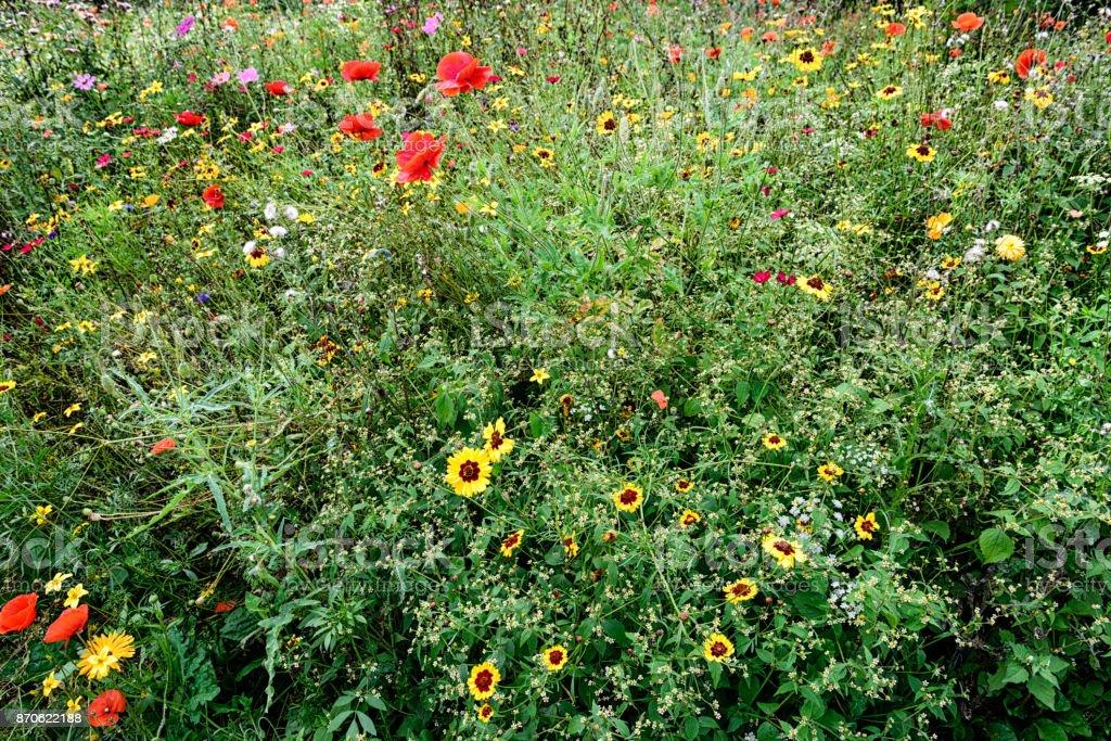 English wildflower garden in summer stock photo