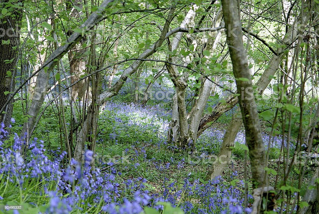English Woodland 01 royalty-free stock photo