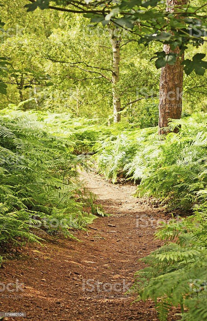 English woodland bark pathway royalty-free stock photo