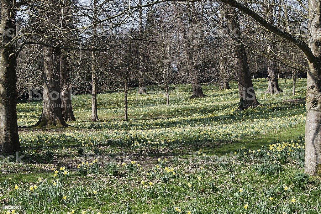 Inglese boschi di primavera foto stock royalty-free