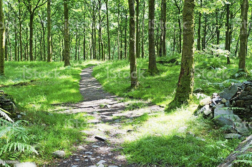 English woodland pathway stock photo