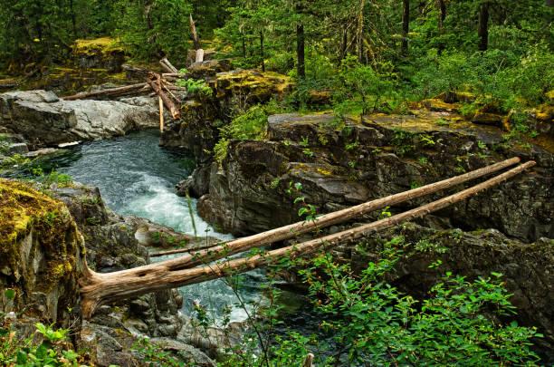 englishman river falls provincial park - provincial park stock photos and pictures