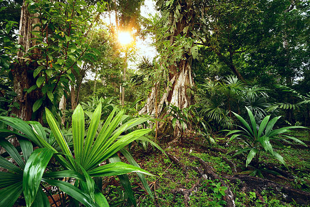 Enigmatic and mysterious rainforests of Central America. Guatema stock photo