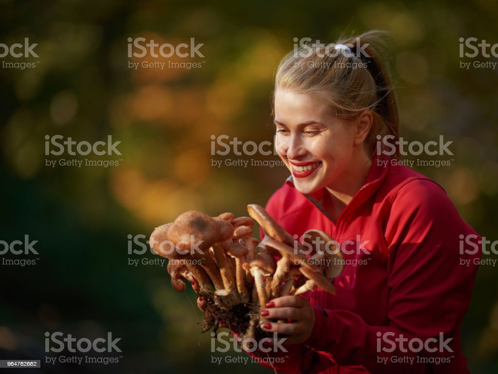 enjoy collecting mushrooms royalty-free stock photo