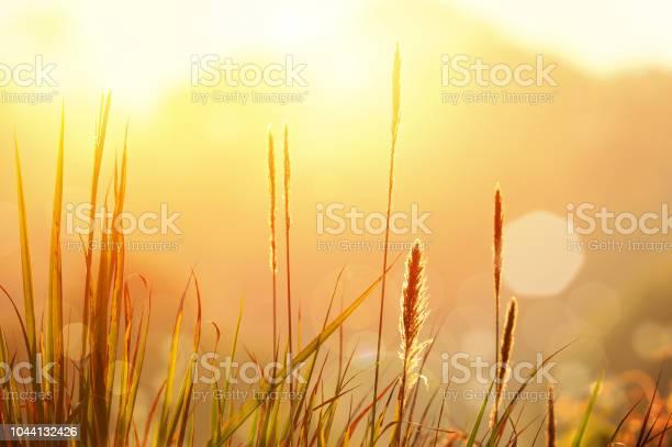 Enjoy your beautiful day picture id1044132426?b=1&k=6&m=1044132426&s=612x612&h=fzcq8rpzeqkv drskmyvwgmelvdufefdxbmbrvk5qig=