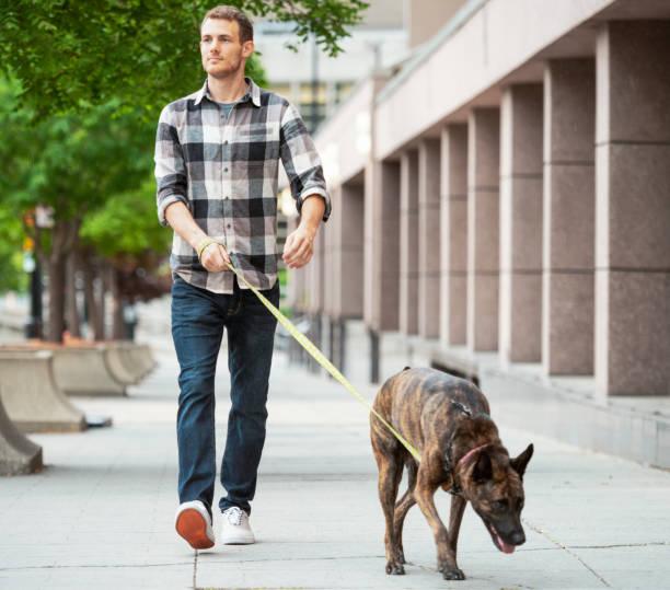 Genießen Eines Hundespaziergangs – Foto