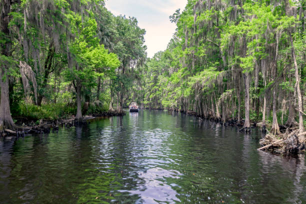 genieten van een airboat ritje op shingle creek - bald cypress tree stockfoto's en -beelden