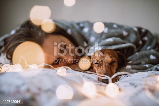 Pretty Young Woman Enjoying Christmas Morning With Her Beautiful Dachshund in Bed