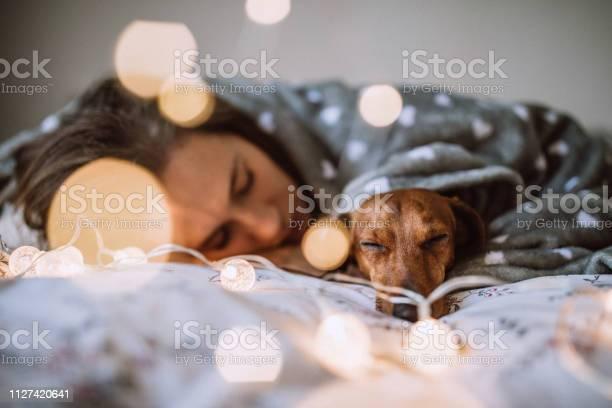 Enjoying christmas morning with her beautiful dachshund in bed picture id1127420641?b=1&k=6&m=1127420641&s=612x612&h=dqm5ngzoogdoeez6mtsa6ekc w9zzq3tz19iybm dri=