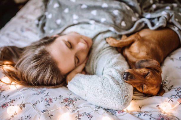 Enjoying Christmas Morning With Her Beautiful Dachshund in Bed stock photo