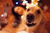 istock Enjoying Christmas 884722668