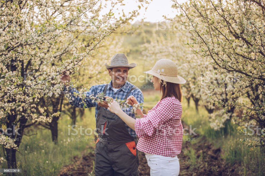 Man and woman, father and grown up daughter in orchard.