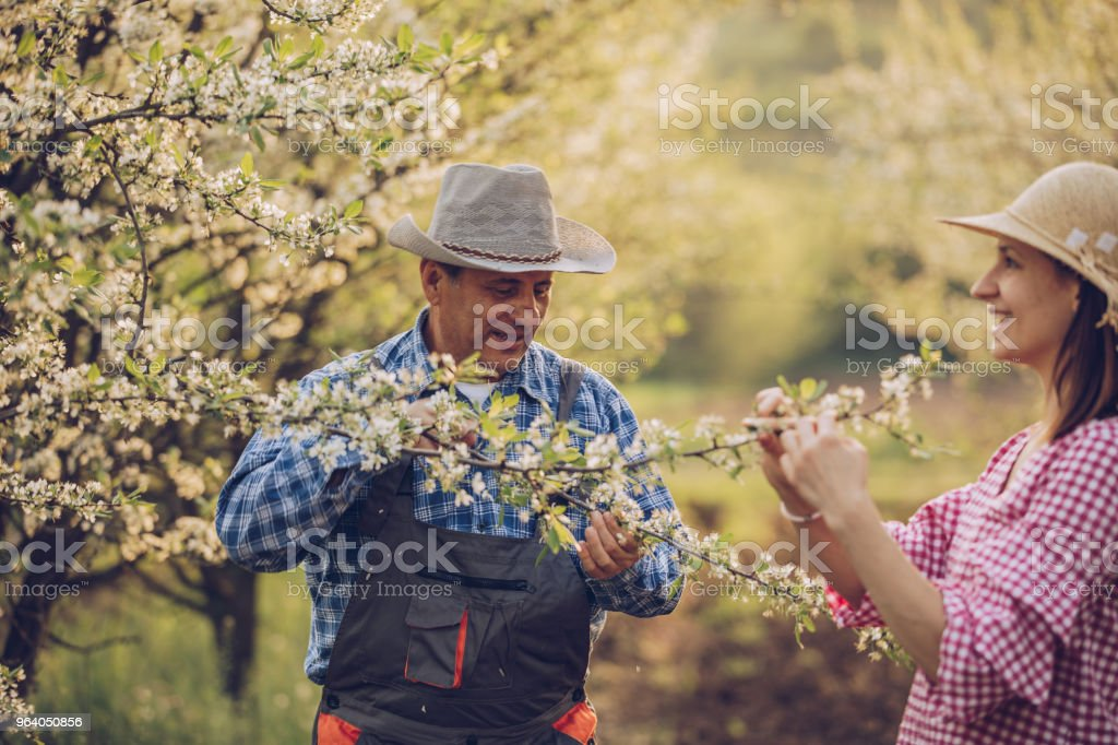 Enjoying in orchard on lovely day - Royalty-free Active Seniors Stock Photo
